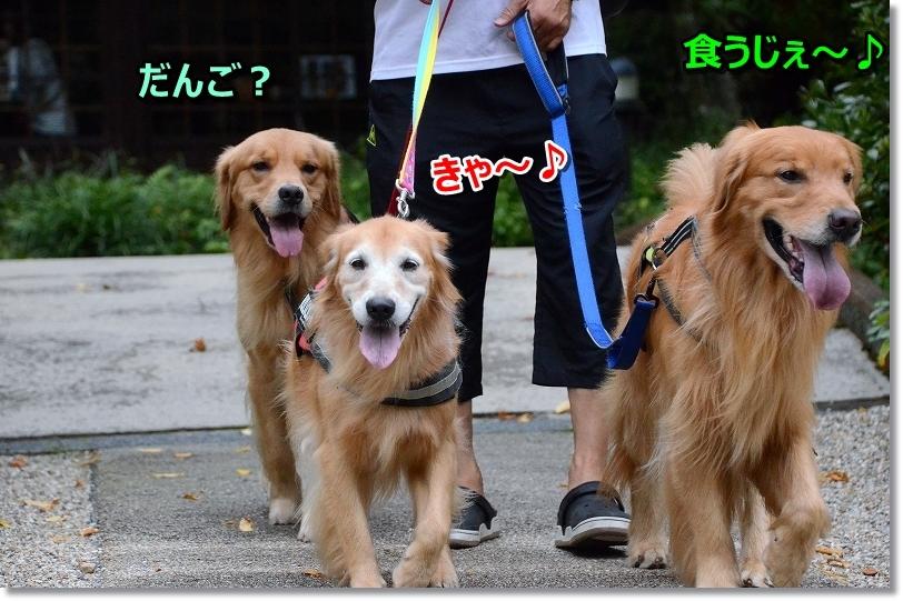DSC_0503お団子だ~