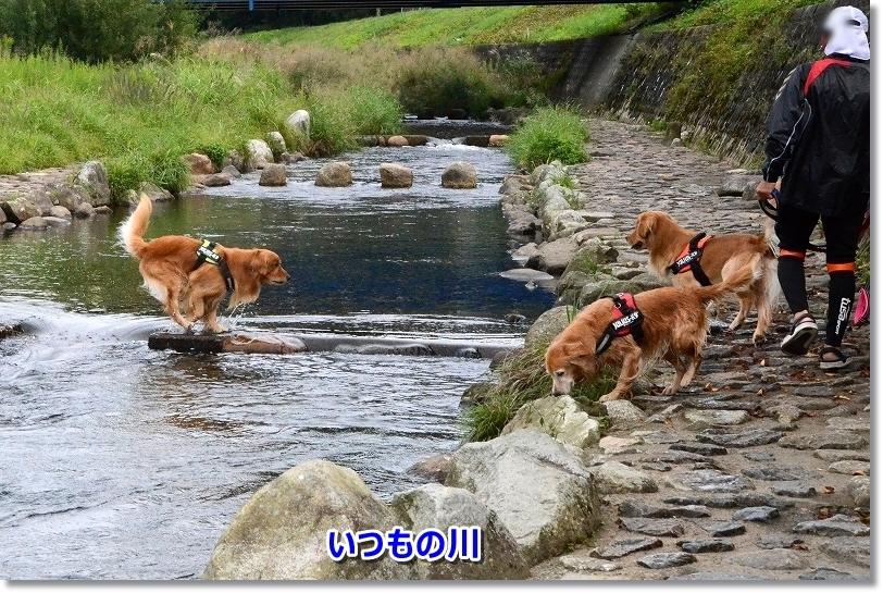 DSC_0531いつもの川遊び