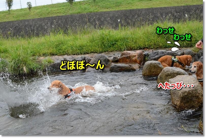DSC_0589へたっぴ~