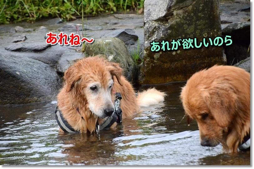 DSC_0812むむ・・・