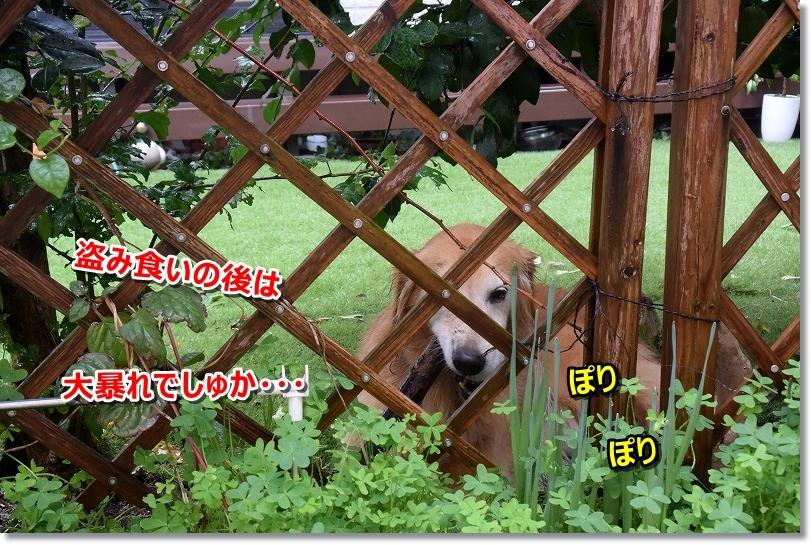 DSC_9897見物でしゅ