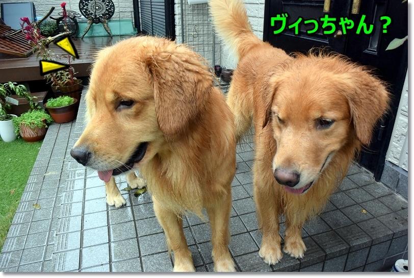 DSC_9919ヴィっちゃん?