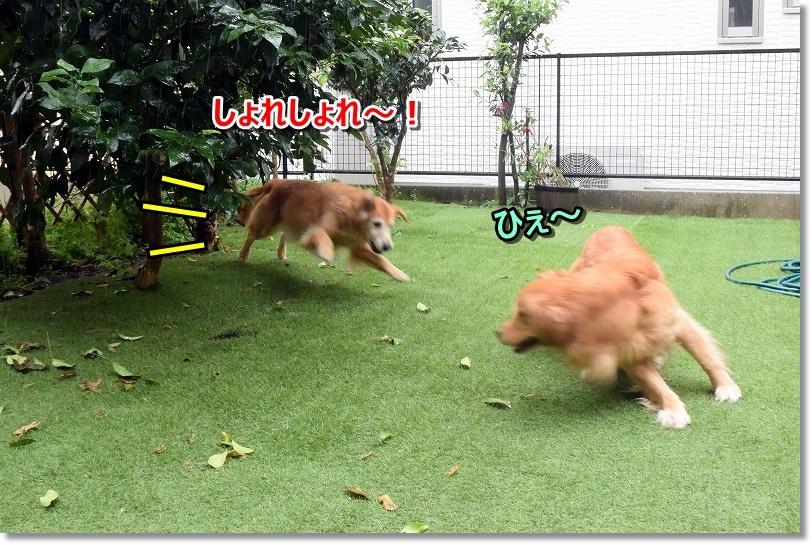 DSC_9922しょれしょれ~!