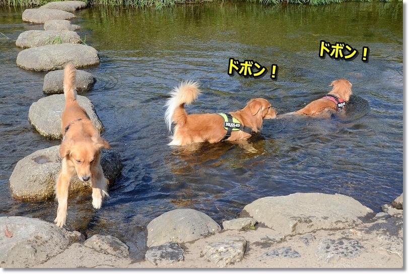 DSC_1196ドボン まだ川遊び(^▽^;)