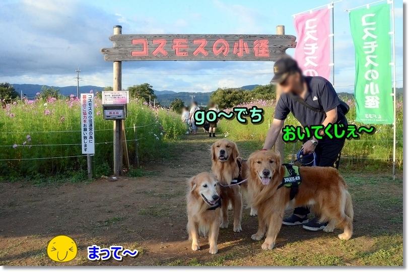 DSC_1477go~でち