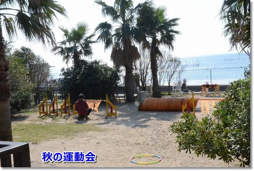 DSC_1586運動会 秋晴れ