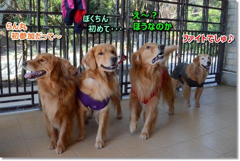 DSC_1599しゅふれ~