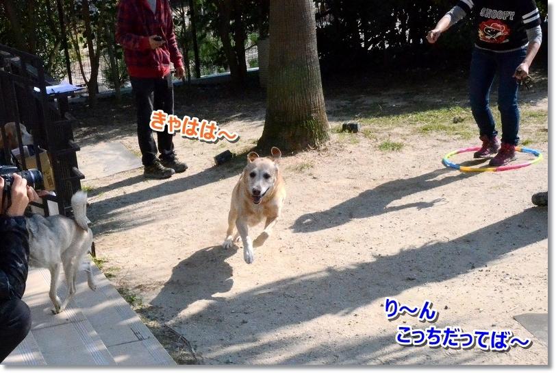 DSC_1685りんちゃん