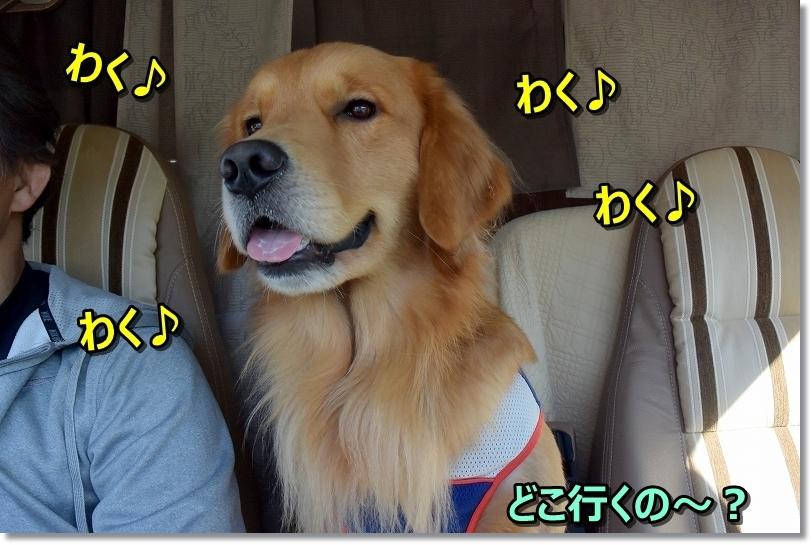 DSC_0109わくわく