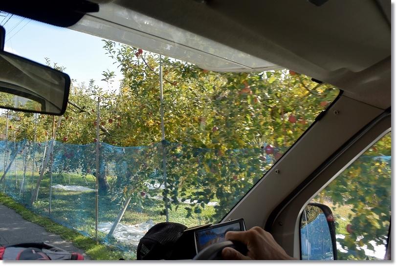 DSC_0129この辺り一帯リンゴ農園