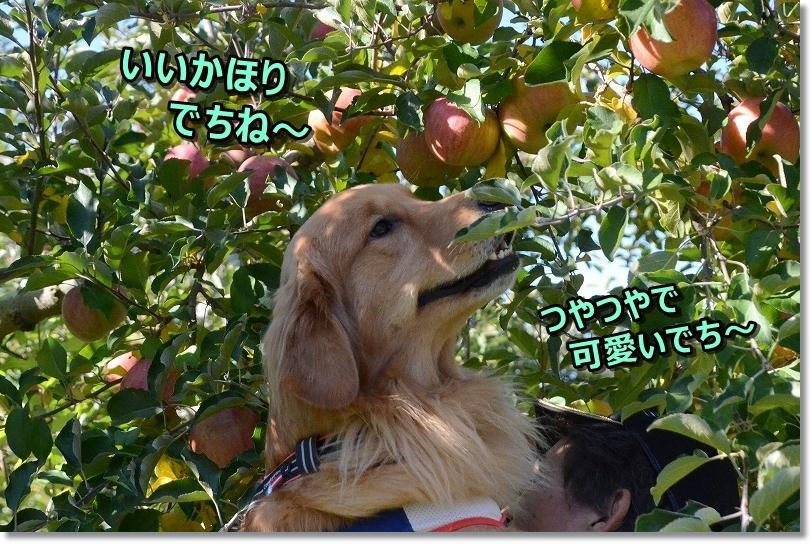 DSC_2212 らんとリンゴ