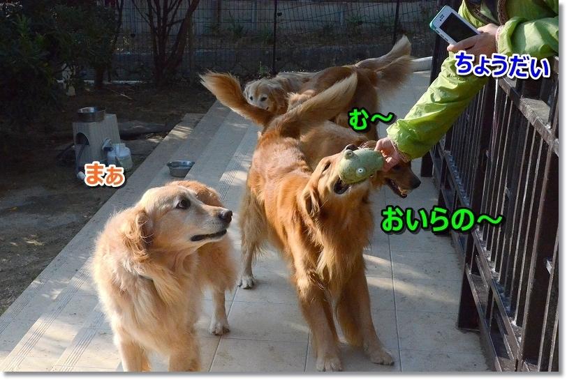 DSC_2325 おいらの~