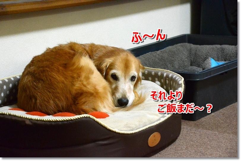 DSC_2584ふ~ん