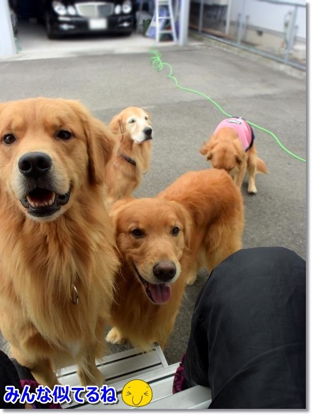 DSC_0407ヴィヴィは警備犬でしゅ