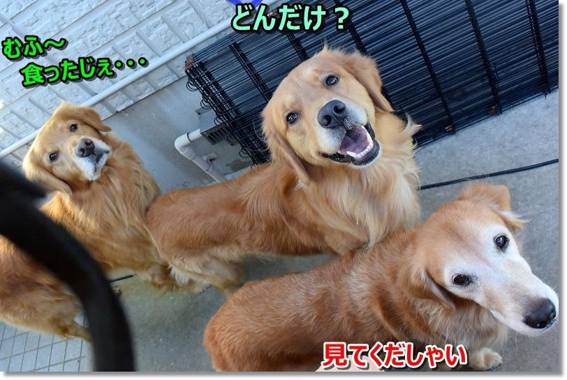 DSC_0419和は~♪