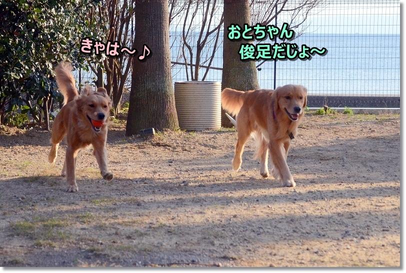 DSC_2440おとちゃんとボール遊び