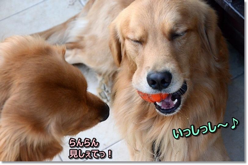 DSC_2442らんちゃん、みしぇて! いsっしっし~