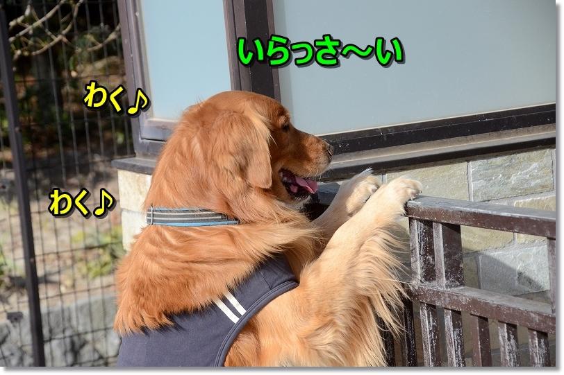 DSC_3561いらっさ~い♪