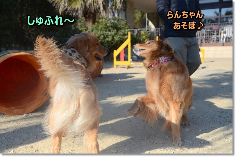 DSC_4125あしょぼ