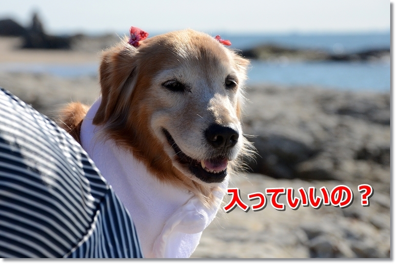 DSC_2922優しい笑顔 みじゅバカさん