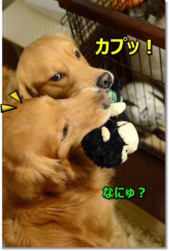 DSC_3330かぷ