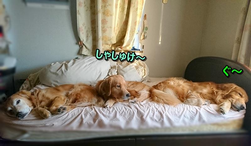 DSC_0064しゃしゅけ