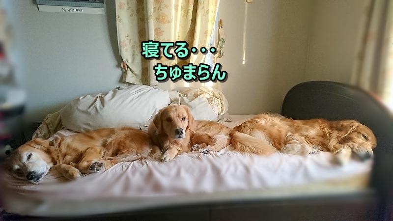 DSC_0069まだ寝てる・・・