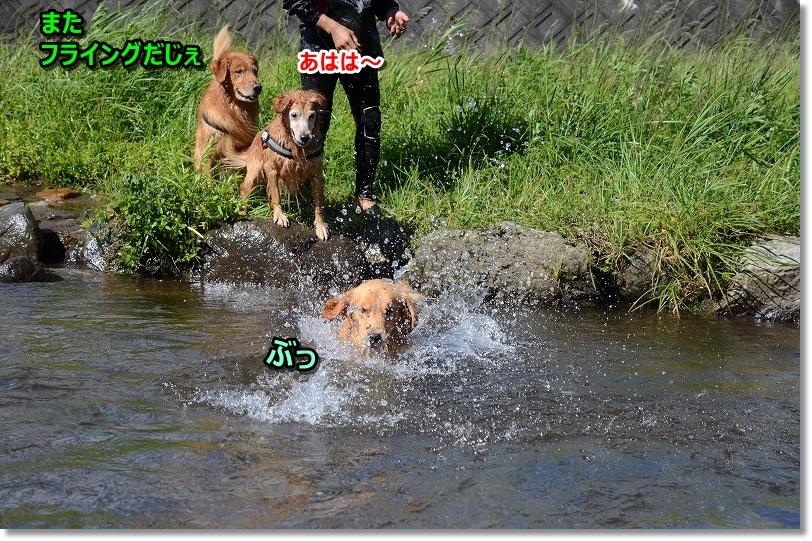 DSC_0176_20171006204524bdb.jpg