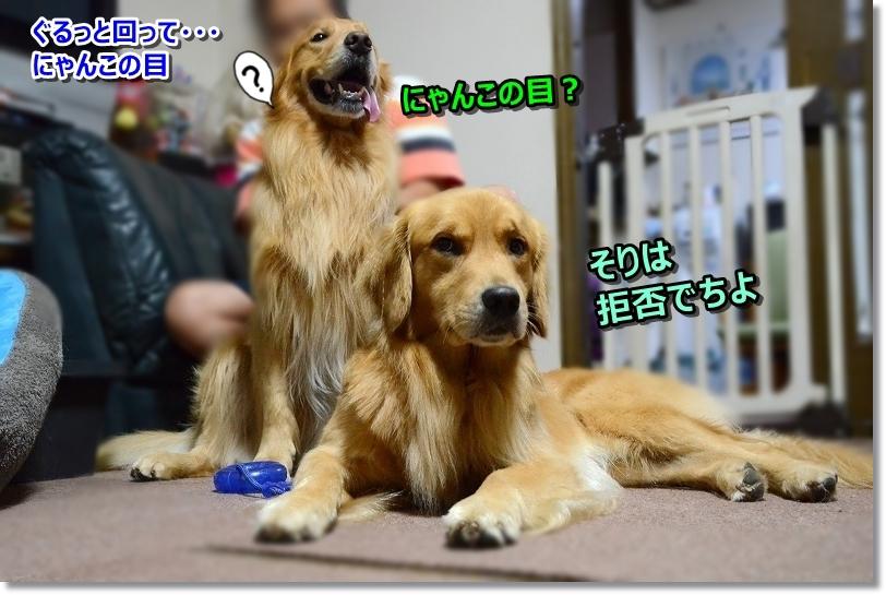 DSC_0372_20171007173815b6c.jpg