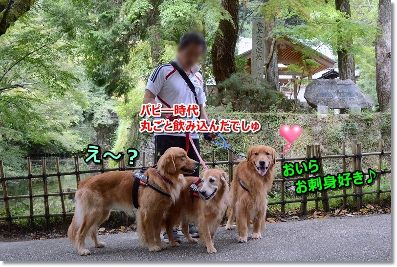 DSC_0392_20171011175119008.jpg