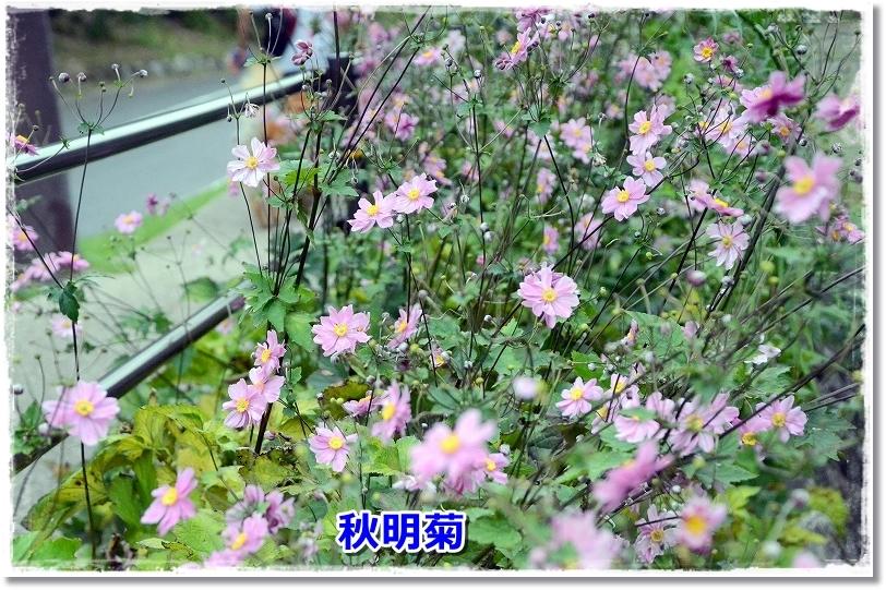 DSC_0517_201710111834582eb.jpg