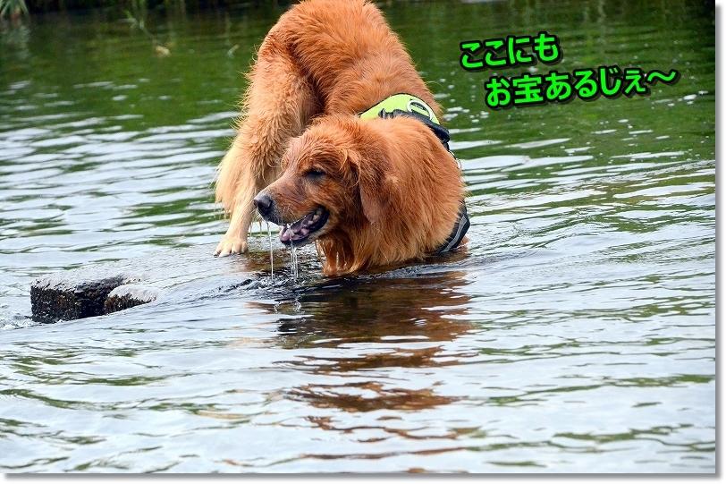 DSC_0732_20171013193003c71.jpg