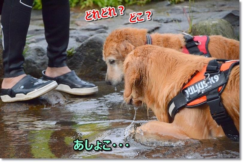 DSC_0810_20171013193209d73.jpg