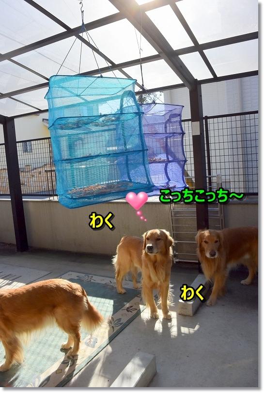 DSC_0812_2017122818495505d.jpg