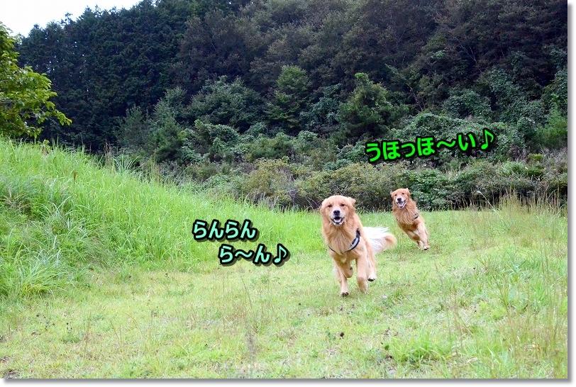 DSC_0839_201710142036216f1.jpg
