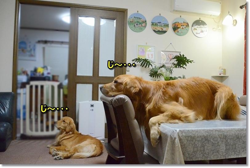 DSC_2589madakana.jpg
