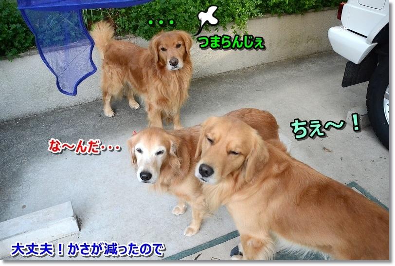 DSC_3104_201712131136580a0.jpg