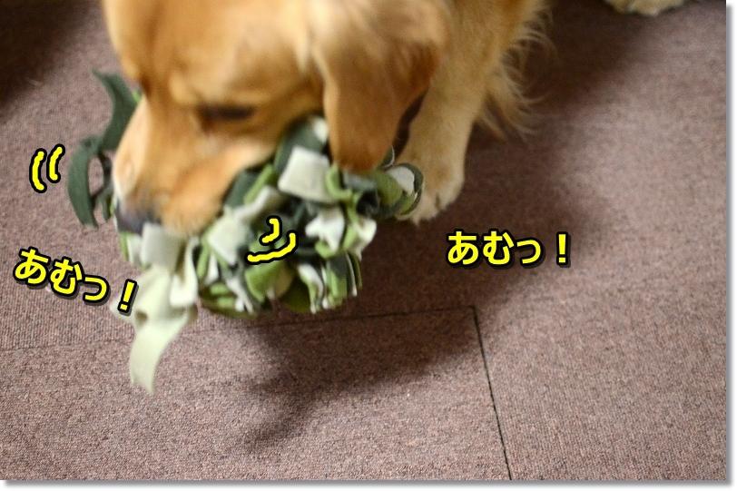 DSC_3232sutasuta.jpg