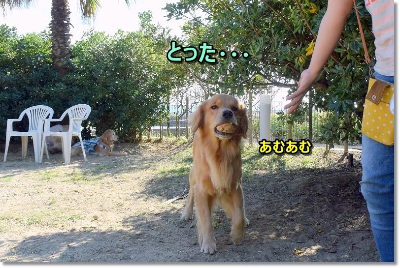 DSC_9583.jpg