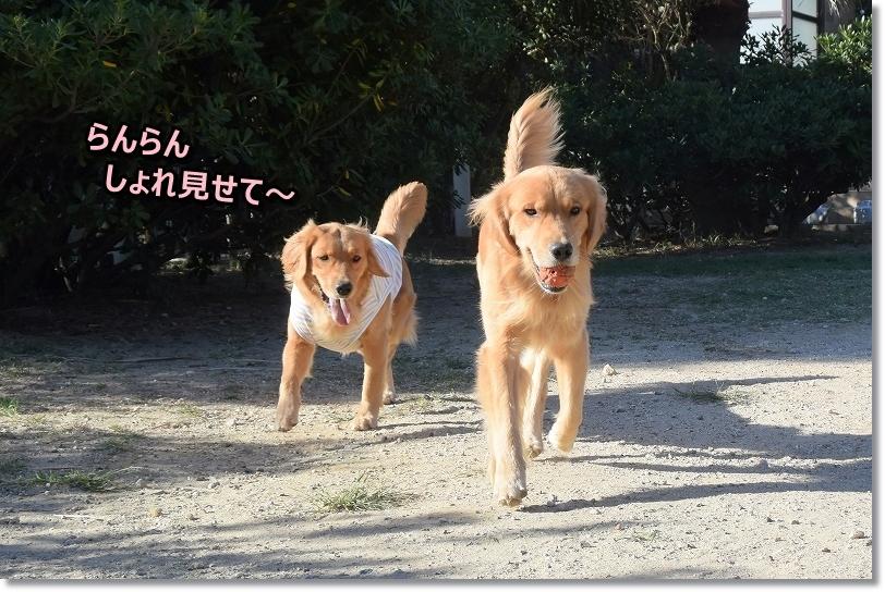 DSC_9603_20171016002421ed1.jpg