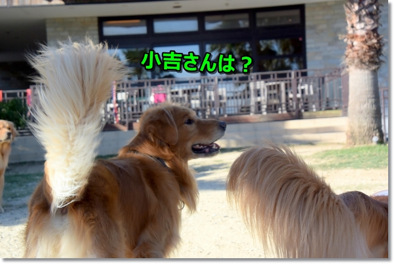 DSC_9607_201710160025366b4.jpg