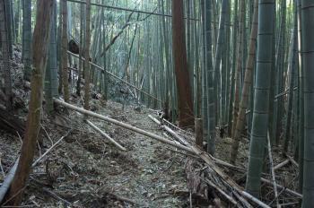 芥川山05