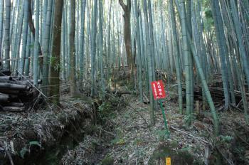 芥川山08