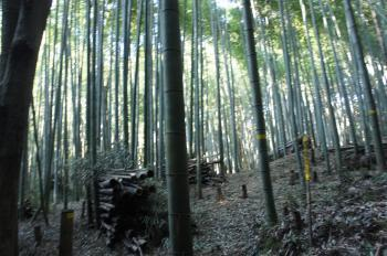 芥川山09