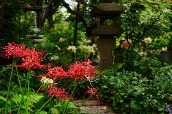 常泉寺19
