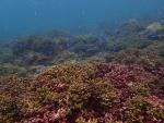 サンゴ畑♪