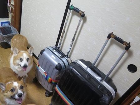 イージーハング!と犬