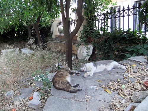 アクロポリス北側の猫さん_バテバテ