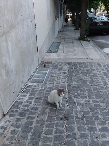 ディオニシウ通りの猫さん (1)