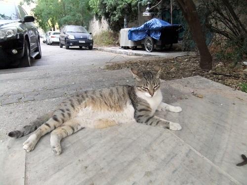 ディオニシウ通りの猫さん (2)